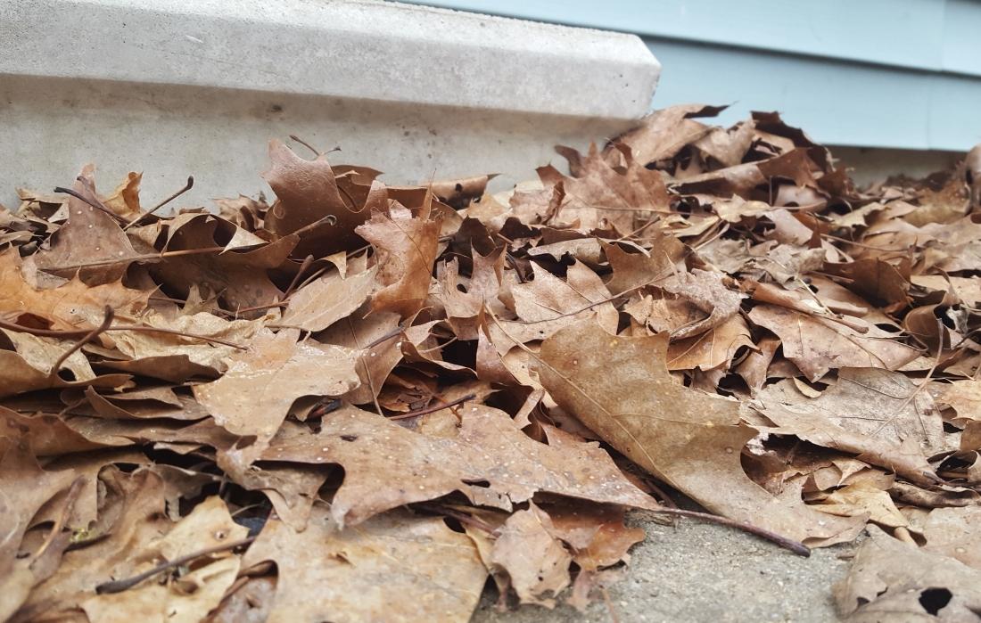 Leaves below the stoop